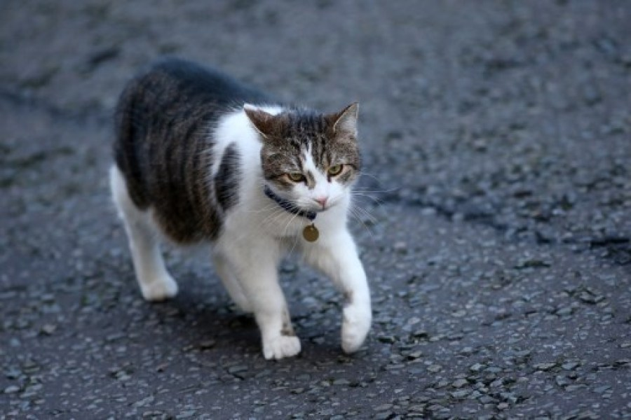 Covid-19 : Deux chats malades du coronavirus à New York