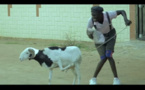 « Mon Mouton et Moi » (Par Ibou Fall)