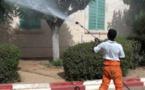 Des nouveaux cas de dingue découvert au Sénégal